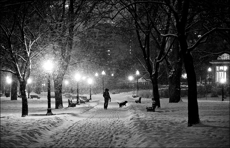 allen-gardens_snow_dog-walker_bw_01